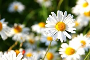 mundo-flores
